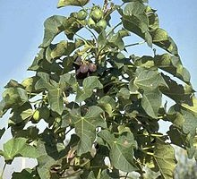 How Do I Create Wealth & Make Money From Biodiesel Fuel Production With Jatropha Curcas?